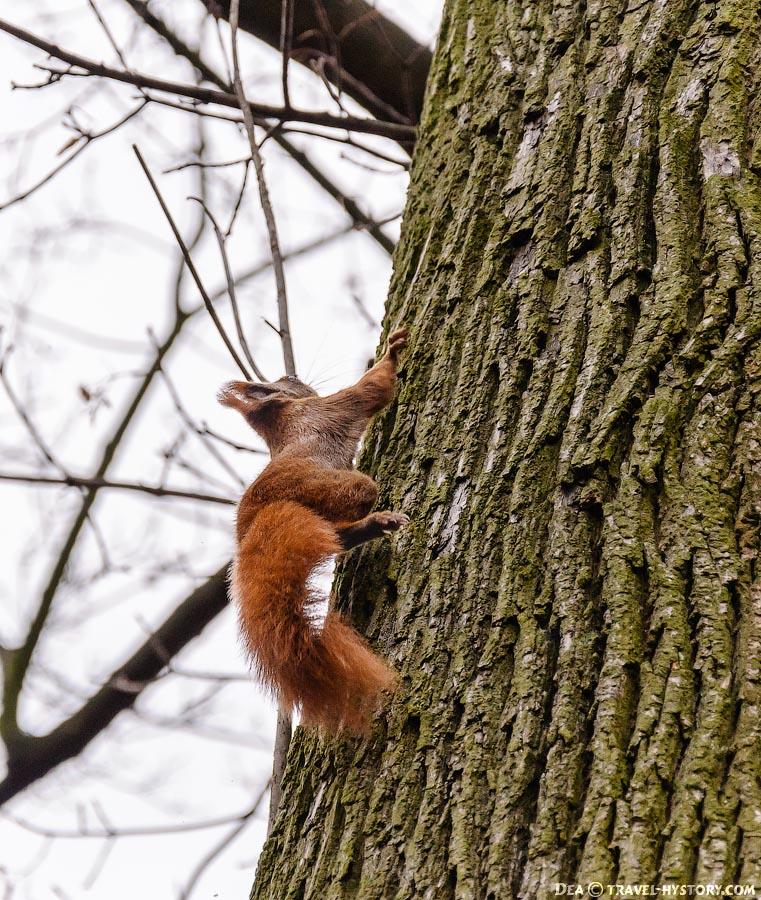 Белка, бегущая по дереву