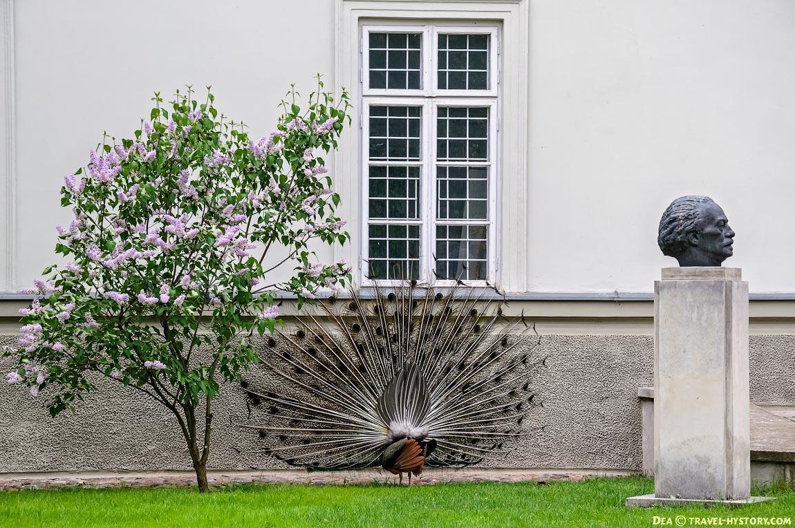 Польша. Королевские Лазенки: фото