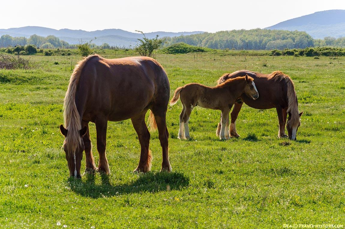 Лошади в селе Родниковском