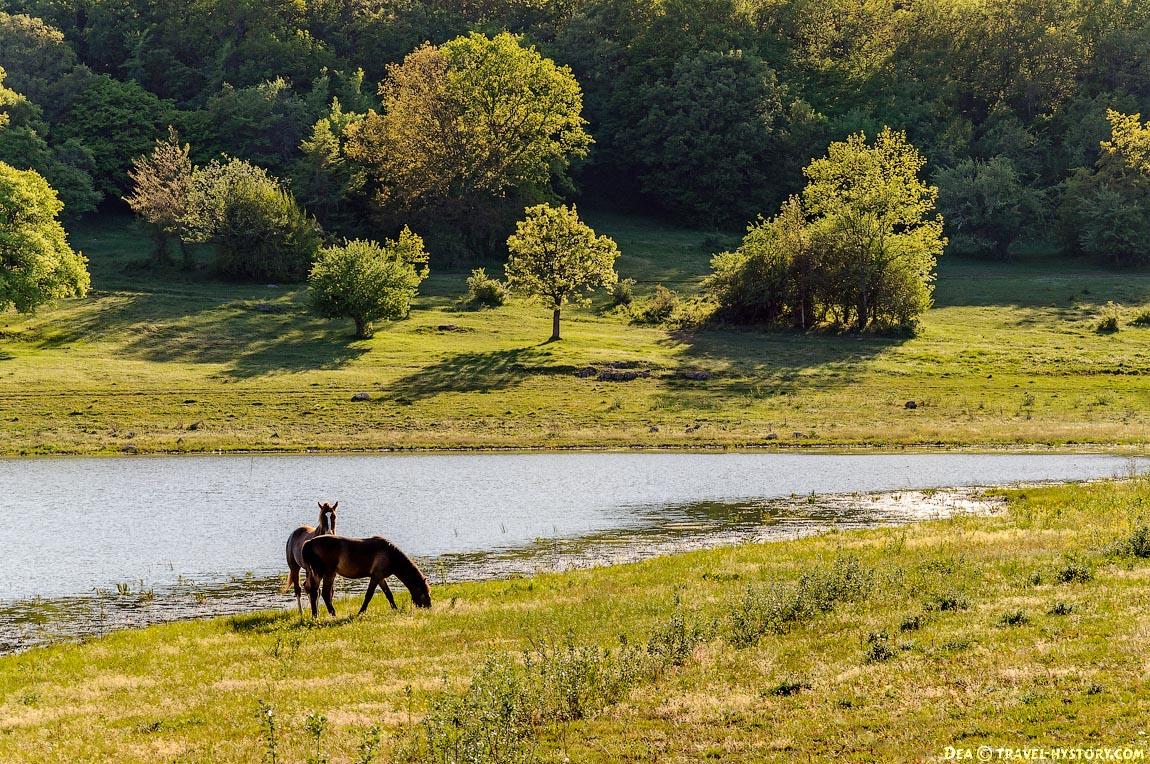 Лошади в Байдарской долине
