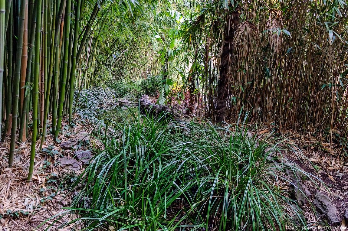 Кусочек тропических джунглей