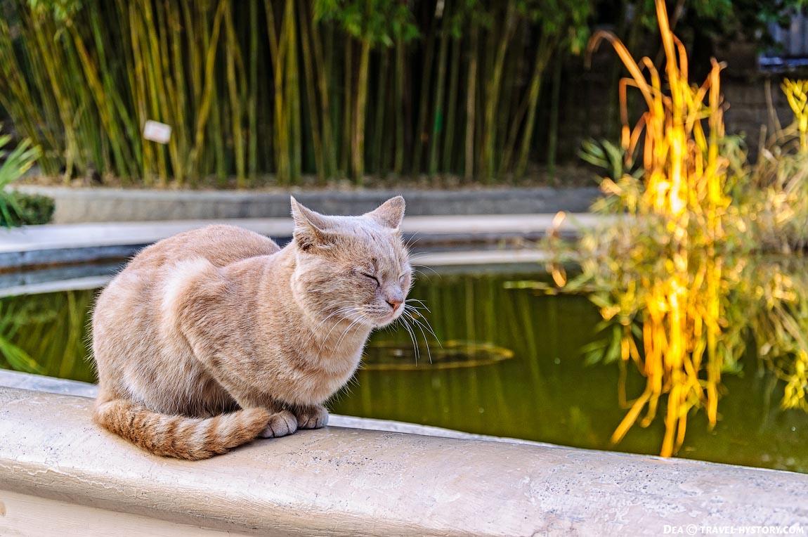 Кот - охранник