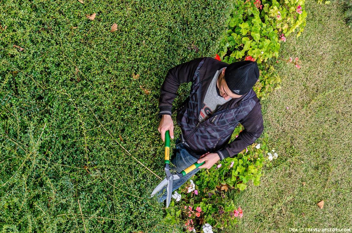 Работник Никитского ботанического сада