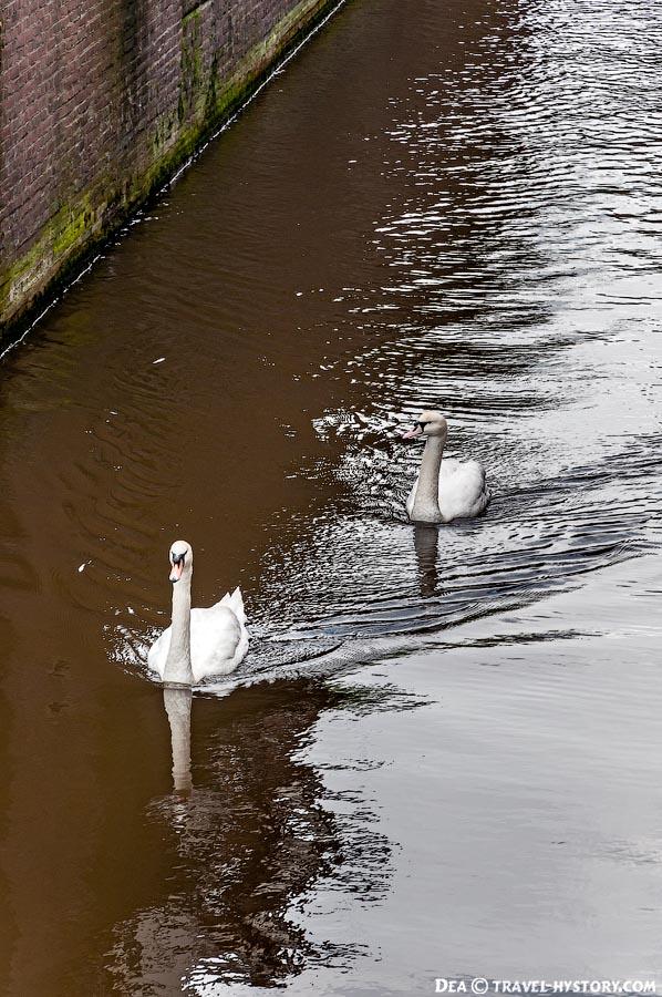 Экскурсия по каналам Амстердама на прогулочном катере, вид на Амстердам с воды: фото