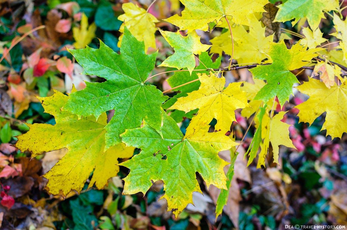 Осенние листья на Малаховом кургане