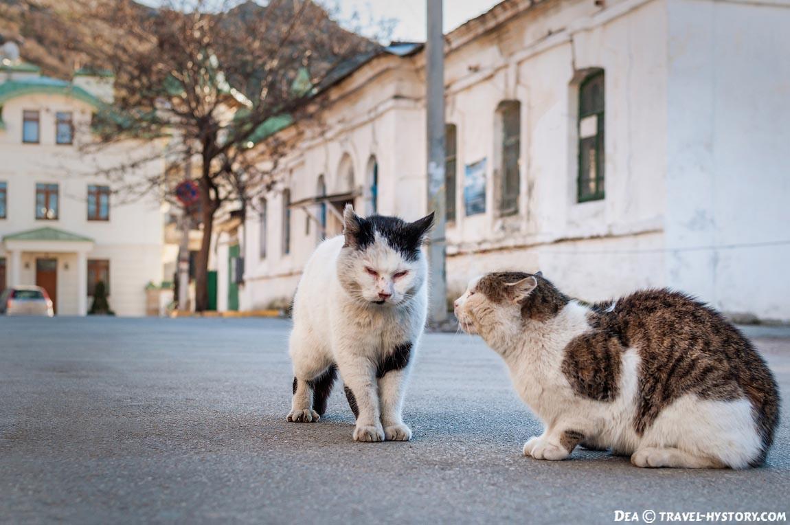 Коты в Балалклаве