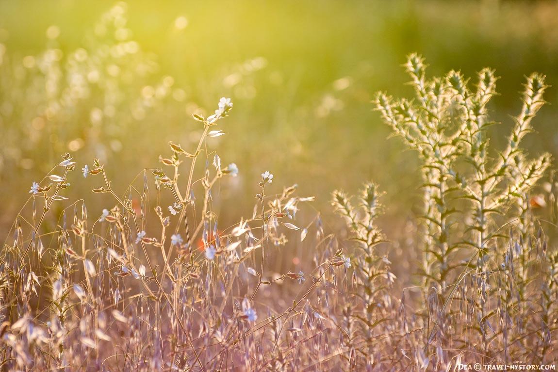 Цветы в контровом свете