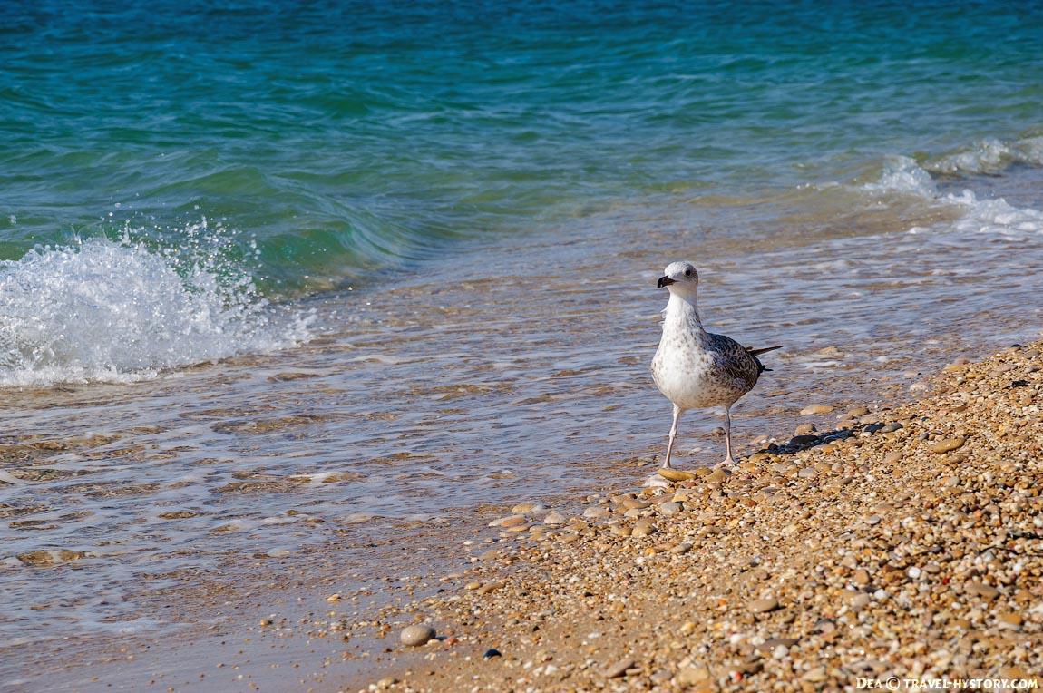 Чайка у кромки моря