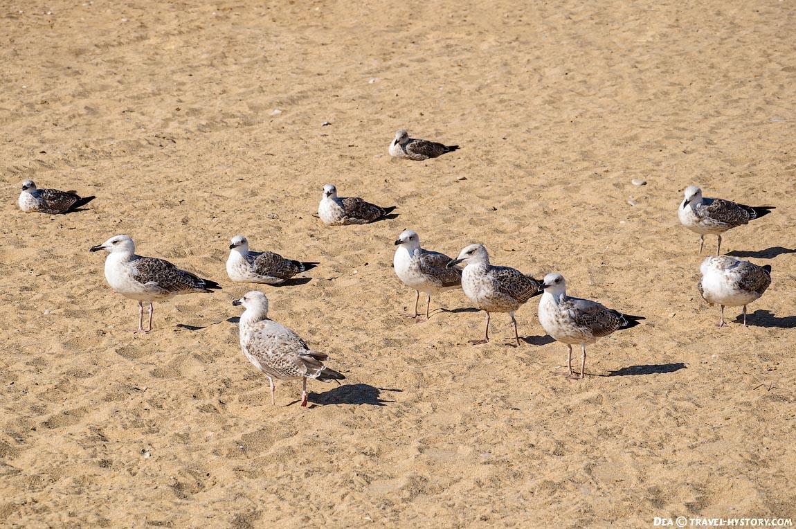 Чайки в Любимовке