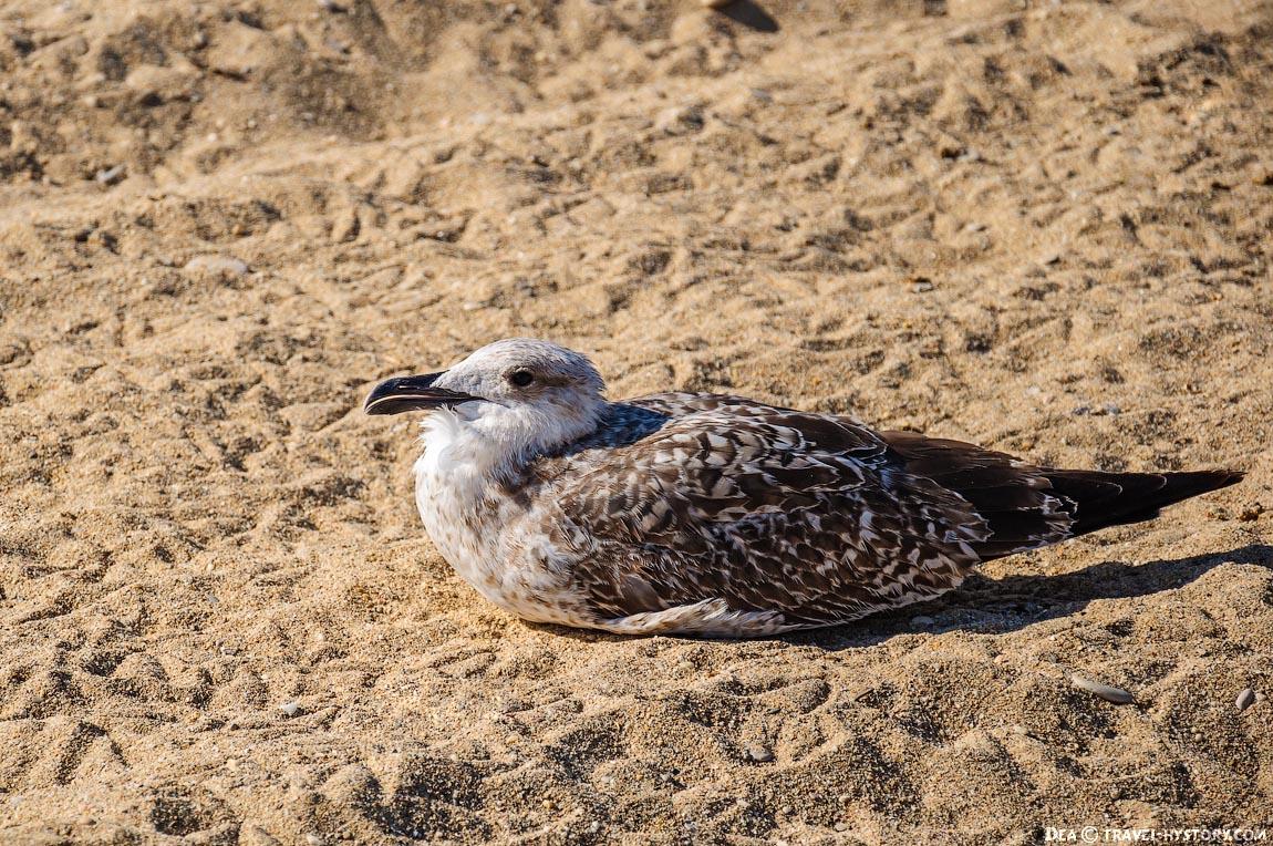 Одинокая чайка на пляже