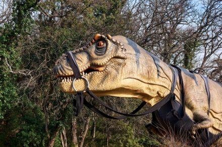 В гости к динозаврам. Приморский парк Никитского Ботанического сада